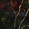 Nishinomiya Tsutakawa Japanese Garden, Sunrise