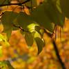 Autumnal Lilac