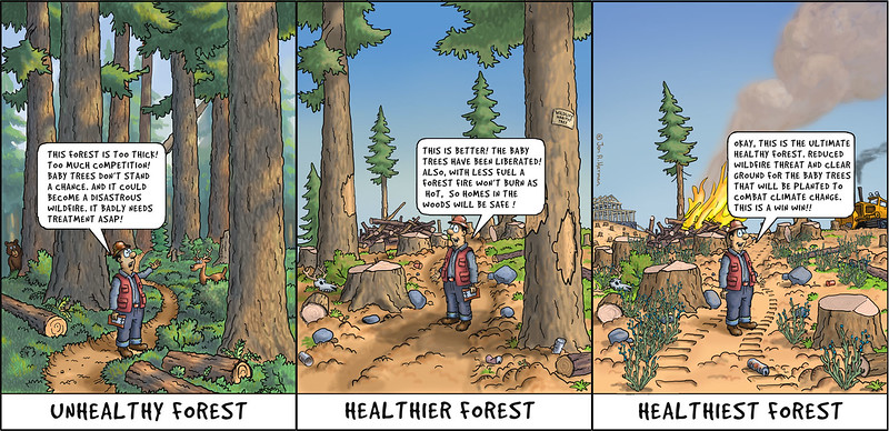 Healthiest Forest Ever