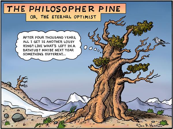 The Philosopher Pine
