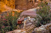 A donkey at rest in the archeaological site of Petra, Hashemite Kingdom of Jordan, Middle east,