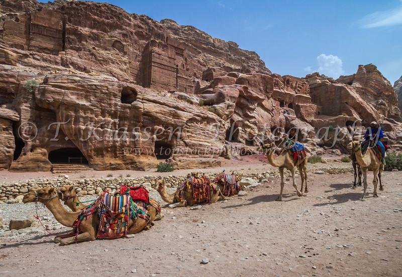 Camels in the ruins of Petra, Hashemite Kingdom of Jordan.