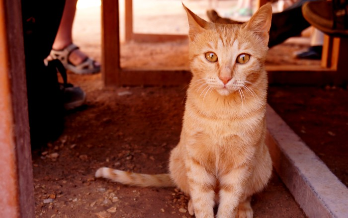 Cute kitten in Petra.