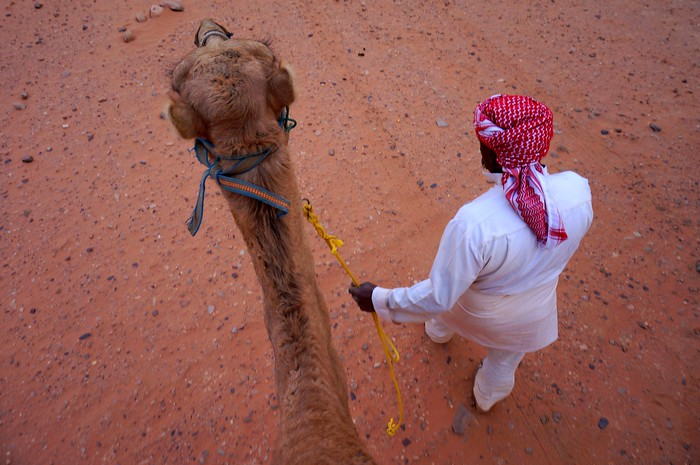 Bedouin guide leading a camel through the red desert sands of Wadi Rum, Jordan.