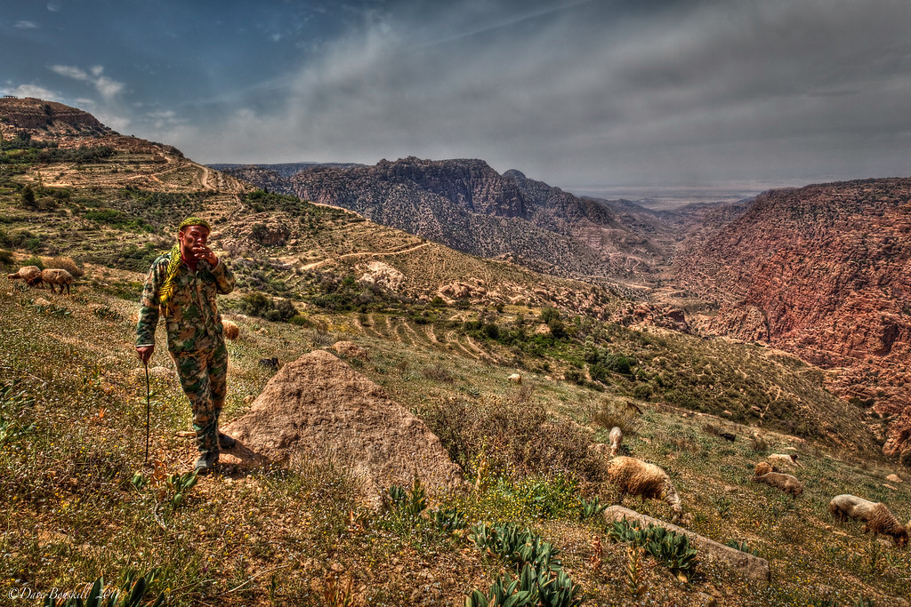 farmer with his sheep at dana biosphere reserve