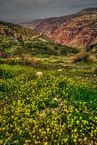 Dana_reserve_jordan_Middle_East-6