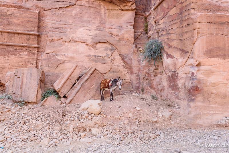 Donkey in the Corner