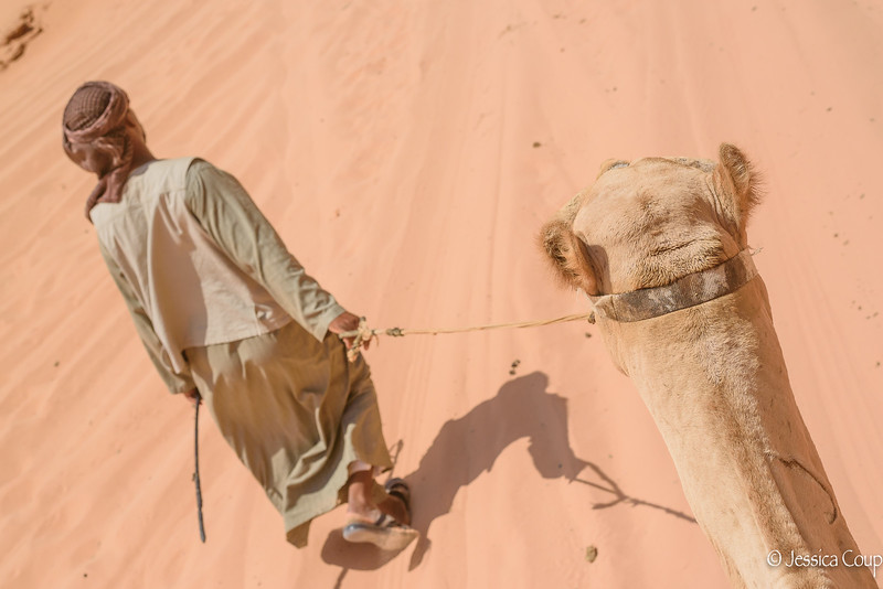 Leading the Camel