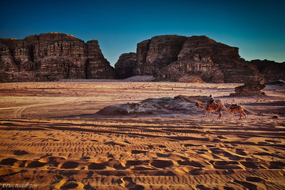 Camels walk the desert of Wadi Rum, Jordan