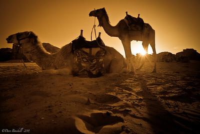 A Wadi Rum Camel Sunset