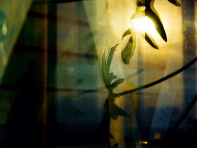 el_sol_entre_las_plantas