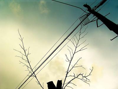 2880cienpiés_comiéndose_un_cable
