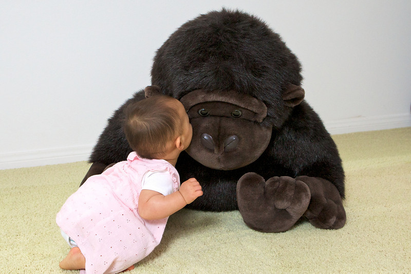 This is my monkey !