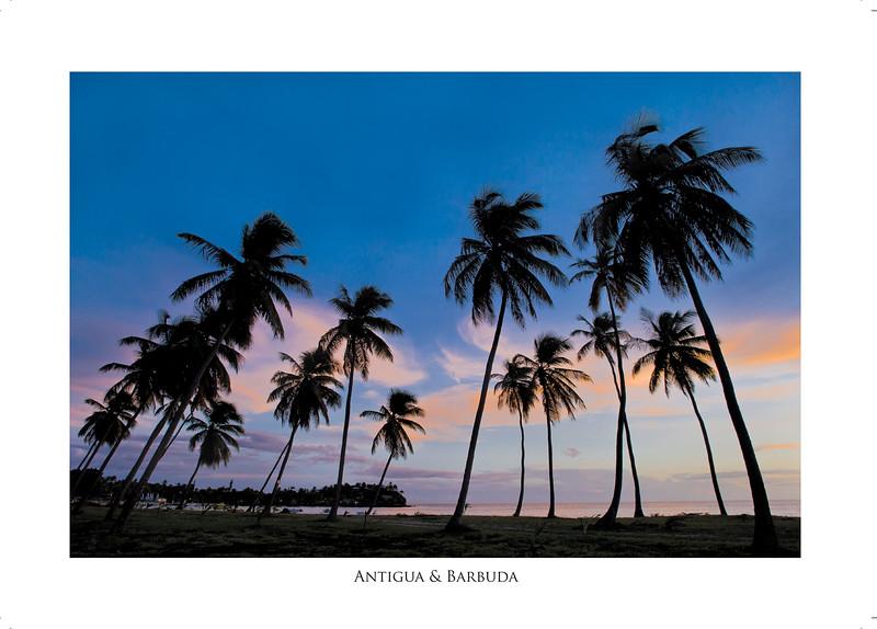 majestic_coconut_palms