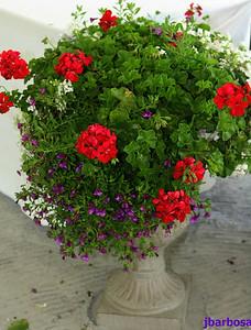 IMG_1921-08-27-05 Floral decor