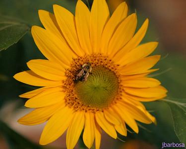IMG_1898-08-27-05 Tanglewood flowers