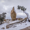 Juniper and Balance Rock in Snow, Joshua Tree National Park