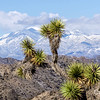 Keys View Snow, Joshua Tree National Park
