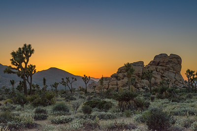 Sunset at Hemmingway, Joshua Tree NP.