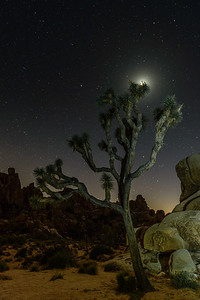 Joshua Tree, moon.