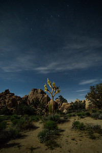 Joshua Tree side lit with a flashlight.