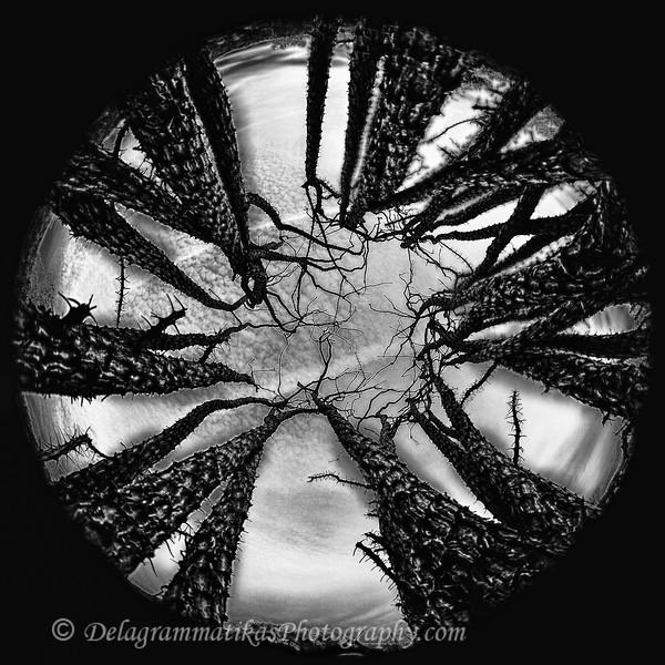 20130202_Joshua Tree_8845_BW