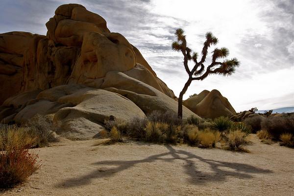 Joshua Tree National Park December 2010