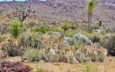 Grouping of desert plant life.