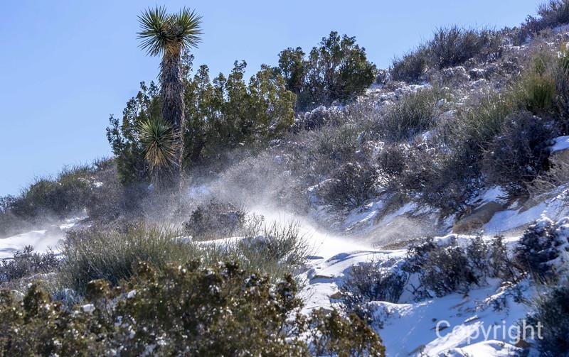 Blowing snow, Ryan Mountain Trail Joshua Tree