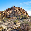 Mastodon Peak Loop - Joshua Tree National Park