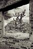 Adobe ruin, Joshua Tree National Park