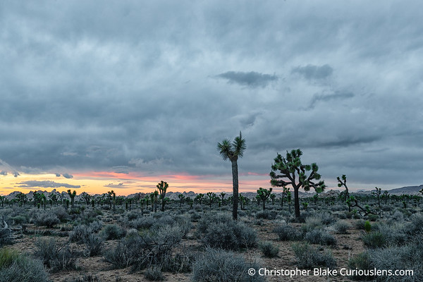 Last Light - Joshua Tree