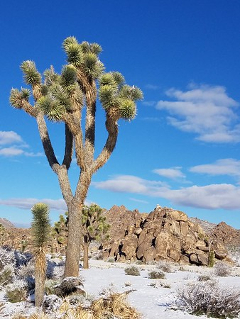 Inside Joshua Tree Monument