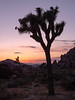 Sunset at Joshua Tree