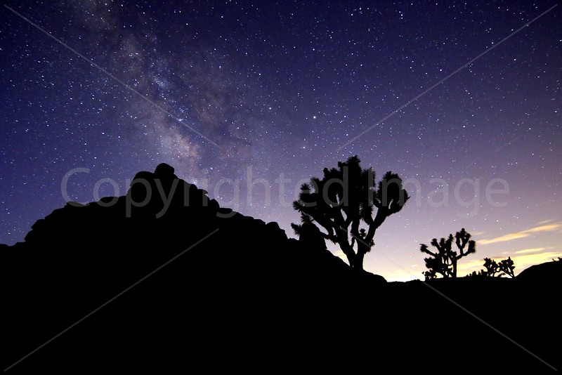 Joshua Tree Night Sky