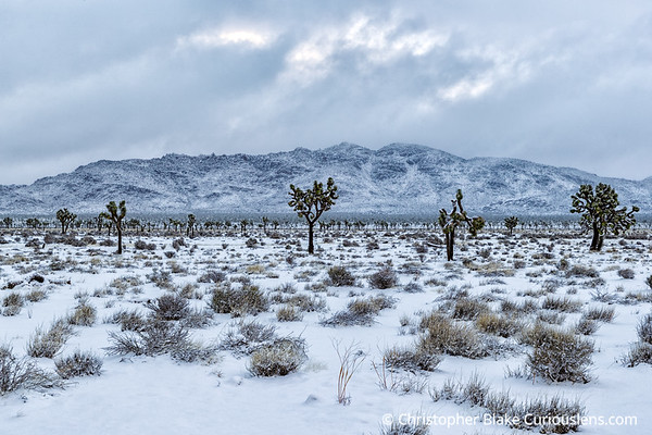Clouds Moving - Joshua Tree Morning