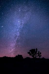 Starry Night  (Joshua Tree CA)
