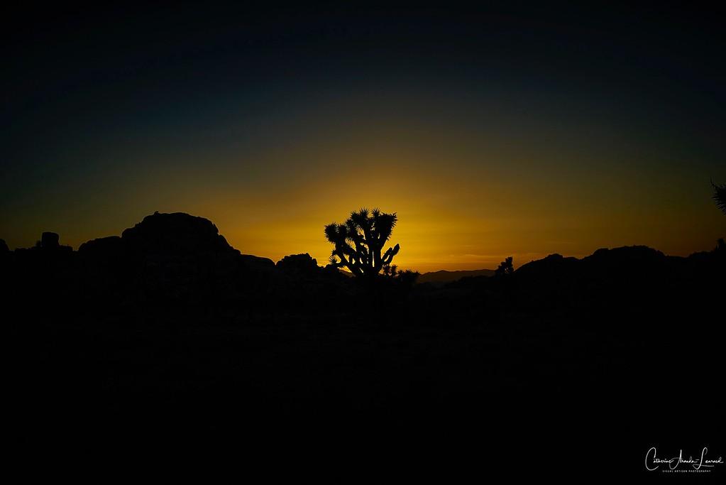 _DSC2729Joshua Tree©CAL ©CAL