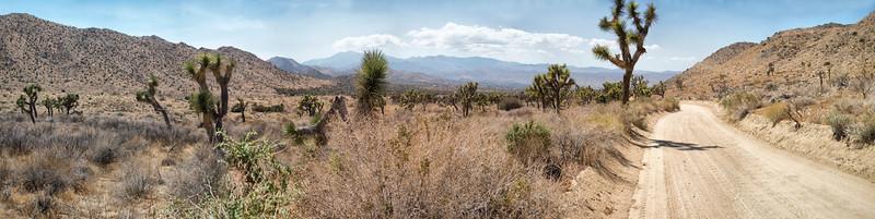 Covington Flats, Joshua Tree National Park, California