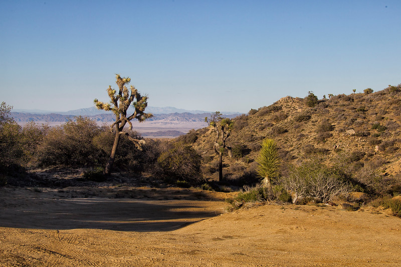 Eureka Peak, Joshua Tree National Park, California