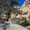 Hidden Valley, Joshua Tree National Park, California