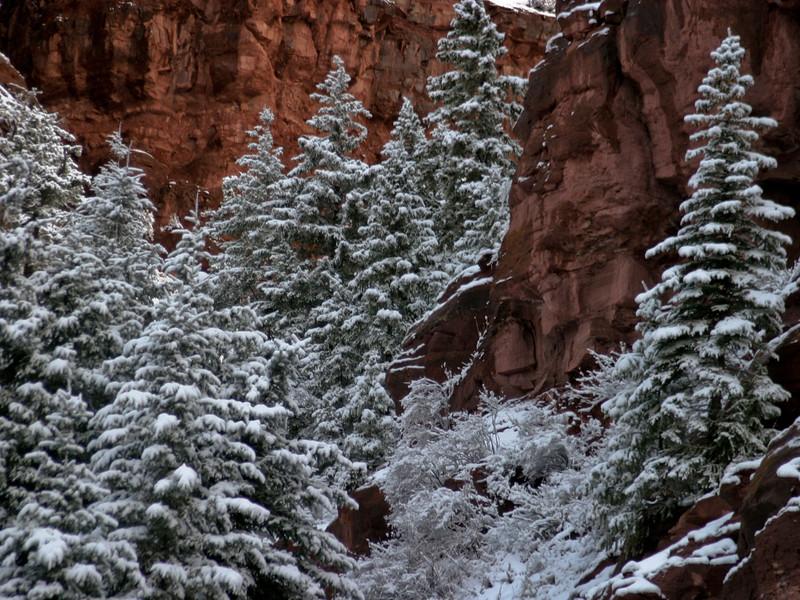 November: Early Snow