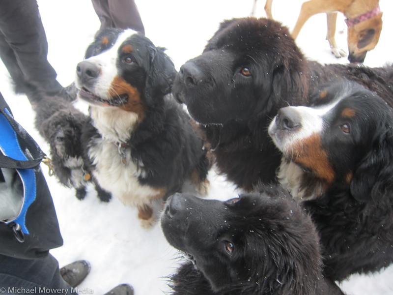 Dog Gathering