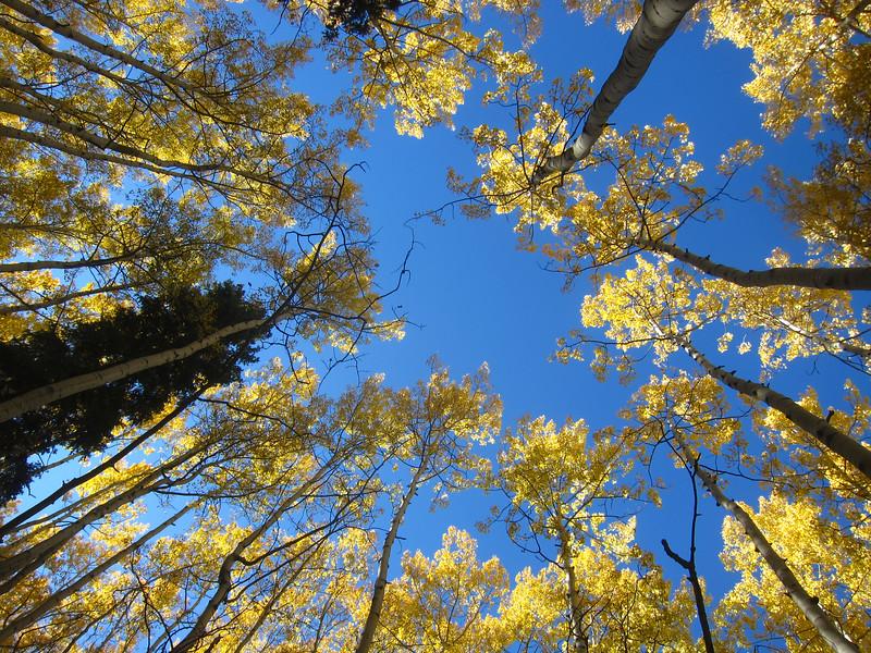 Beautiful October Telluride Day