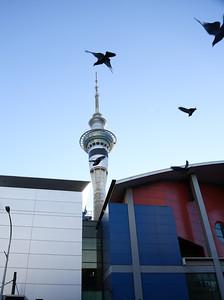 [ 06-23 Auckland CBD-268A8863-]_