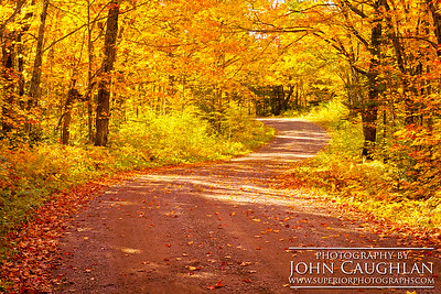 Maple leaves engulf this back country road.
