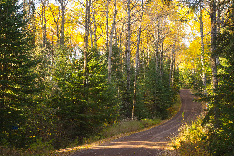 Each year I spend some quality time up on the north shore chasing the fall colors. The maple leaves had already turned the previous week, so I was in search for the yellow aspens and birches. I love driving the back roads in the Superior National Forrest, always on the look out for a moose.