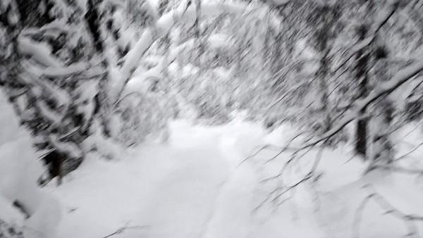 Walking in the Snowy Woods #1