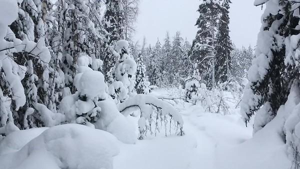 Walking in the Snowy Woods #3
