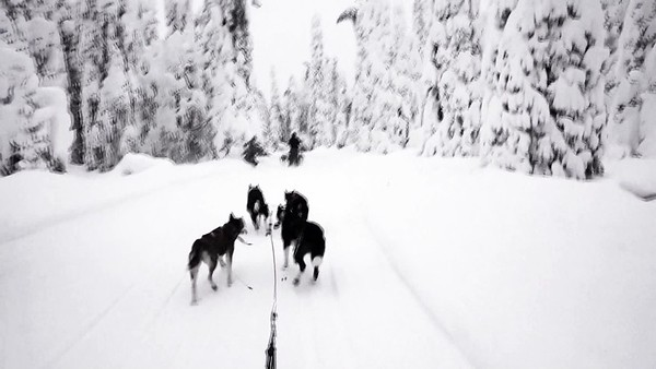 Mushing in the Woods #2